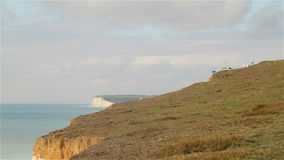 Seagulls at Beachy Head and Seven Sisters Cliffs stock video footage