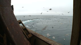 Seagulls behind a board of the fishing trawler. stock video footage