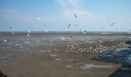Seagulls bird at the sea Bangpu Samutprakarn Thailand. Backgrounds Stock Photo