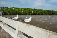 Seagulls bird at the sea Bangpu Samutprakarn Thailand. Backgrounds stock photo