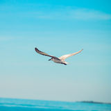Seagulls birds Stock Photography