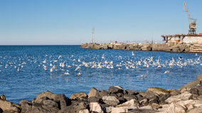 Seagulls on the black sea Royalty Free Stock Images