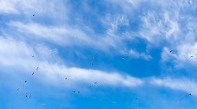 Seagulls in the blue sky Royalty Free Stock Photos