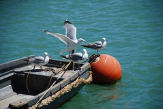 Seagulls on boat, Folkestone Royalty Free Stock Photo
