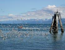 Seagulls, a boat, and a pier pillar Stock Photos