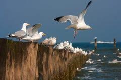 Seagulls on bollards Stock Photos