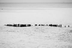 Seagulls on breakwater Stock Image