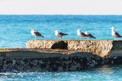 Seagulls on a breakwater. Stock Photography