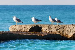 Seagulls on a breakwater. Royalty Free Stock Photos
