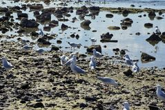 Seagulls on Brighton Beach stock photos