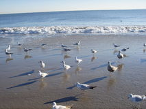 Seagulls on Brighton Beach, New York. Stock Photos