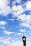 Seagulls in Brighton Stock Image