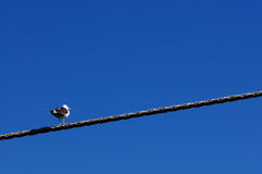 Seagulls on a cable Stock Images