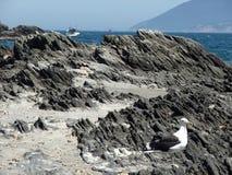 Seagulls Cabo Frio Royaltyfri Foto