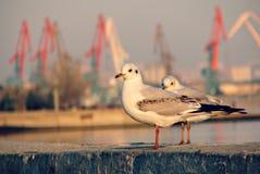 Seagulls on the Caspian Sea Stock Photo