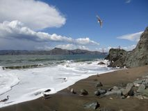 Seagulls on China Beach royalty free stock photos