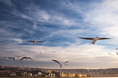 Seagulls and city Stock Image