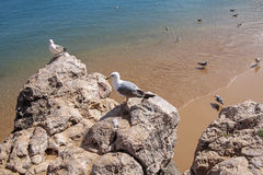 Seagulls on the cliff in Cascais, Portugal Stock Image