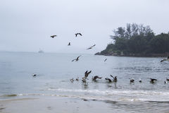 Seagulls in a Cloudy Day Stock Images