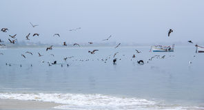 Seagulls in a Cloudy Day Royalty Free Stock Photo