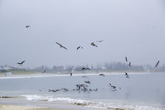 Seagulls in a Cloudy Day Royalty Free Stock Images
