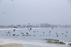 Seagulls in a Cloudy Day Royalty Free Stock Photos