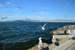 Seagulls on the coast in Buyukada island The Prince Island`s. Flying on the sky. Beautiful view to Istanbul cityline royalty free stock photo