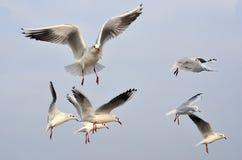Seagulls. At the coast of Poland royalty free stock image