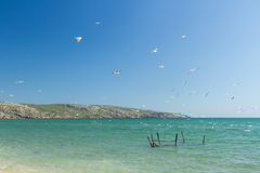 Seagulls on the coast of the Sea of Azov Stock Images