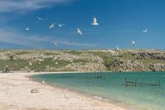 Seagulls on the coast of the Sea of Azov Stock Image