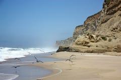Seagulls on the coast. Seagulls soar along the beach Stock Photography
