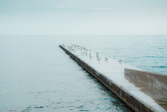 Seagulls on concrete dock at sea Royalty Free Stock Photography