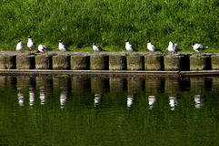 Seagulls on conference Royalty Free Stock Photography