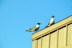 Seagulls on the container roof. royalty free stock photography