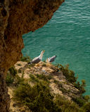 Seagulls. Couple of seagulls from a cliff Royalty Free Stock Image