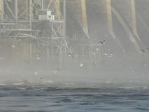 Seagulls and dam Royalty Free Stock Images