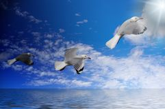 Seagulls dark to light. Three seagulls on a blue sky above water flying from darkness to the light Stock Photos