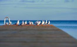 Seagulls on Denmark pier royalty free stock photos