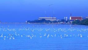 Seagulls Denny przemysłowy miasto zdjęcie wideo