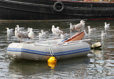 Seagulls on Dinghy. A group of seagulls perch on a dinghy Royalty Free Stock Photos