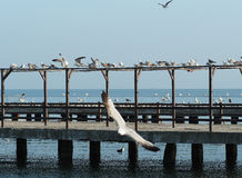 Seagulls at dock Royalty Free Stock Photography