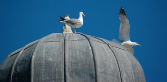 Seagulls on domed building Royalty Free Stock Photography