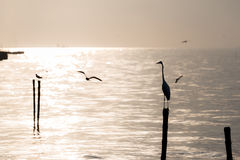 Seagulls and egret on the beach Royalty Free Stock Image