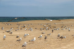 Seagulls on the empty beach Stock Photo