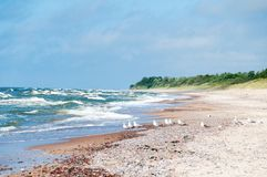 Seagulls on empty beach. With brown sand and sea waves, Karkle, Klaipeda, Lithuania Royalty Free Stock Images