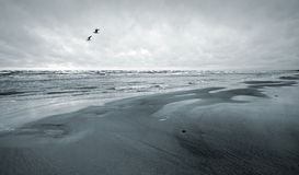 Seagulls and empty coast of the Sea Royalty Free Stock Photos