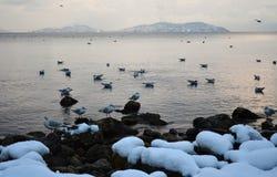 Seagulls en vinterdag på kusten Arkivfoton