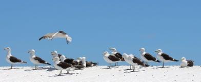 Seagulls enjoying the sun Stock Image