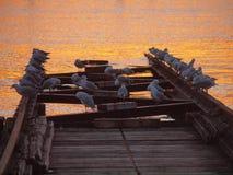 Seagulls enjoying Sunset Royalty Free Stock Images