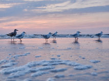 Seagulls in the evening Stock Image